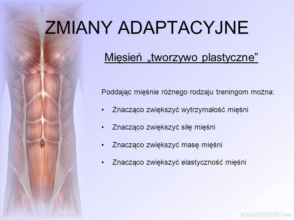 ZMIANY ADAPTACYJNE Mięsień tworzywo plastyczne Poddając mięśnie różnego rodzaju treningom można: Znacząco zwiększyć wytrzymałość mięśni Znacząco zwięk