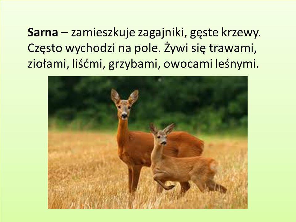 Sarna – zamieszkuje zagajniki, gęste krzewy. Często wychodzi na pole. Żywi się trawami, ziołami, liśćmi, grzybami, owocami leśnymi.