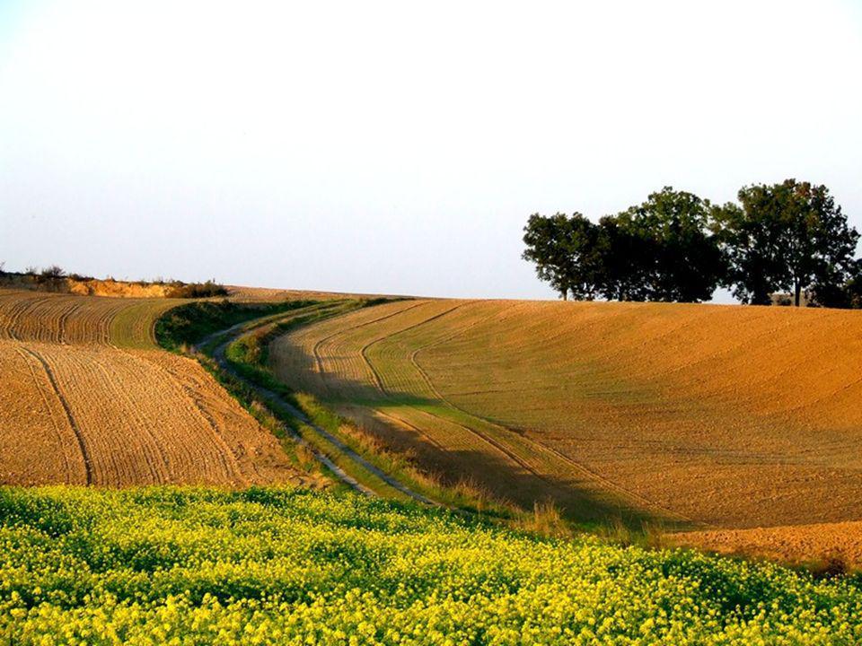 Pole to ziemia uprawna, na której rolnik sieje rośliny np. żyto, pszenicę, kukurydzę, ziemniaki, buraki. Często pola otoczone są wodnymi rowami lub gę