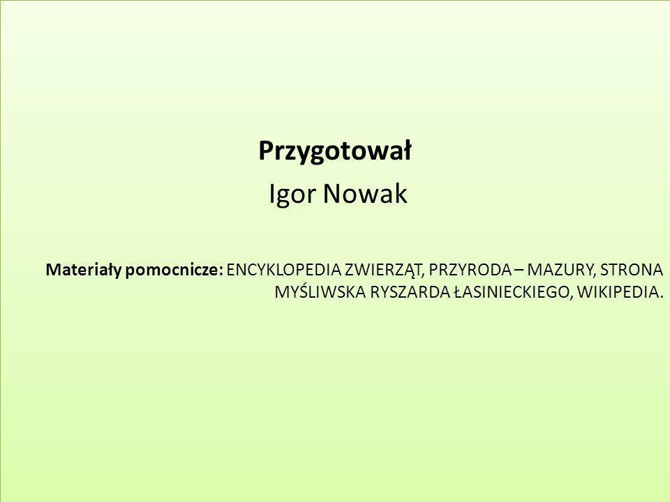Przygotował Igor Nowak Materiały pomocnicze: ENCYKLOPEDIA ZWIERZĄT, PRZYRODA – MAZURY, STRONA MYŚLIWSKA RYSZARDA ŁASINIECKIEGO, WIKIPEDIA. Przygotował