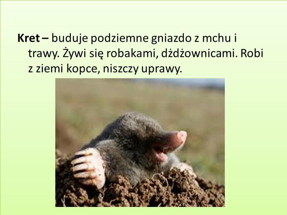 Kret – buduje podziemne gniazdo z mchu i trawy. Żywi się robakami, dżdżownicami. Robi z ziemi kopce, niszczy uprawy.