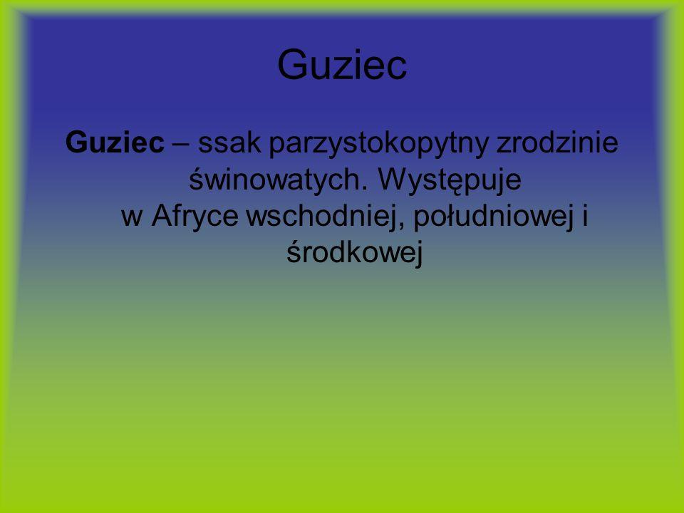 Guziec Guziec – ssak parzystokopytny zrodzinie świnowatych. Występuje w Afryce wschodniej, południowej i środkowej
