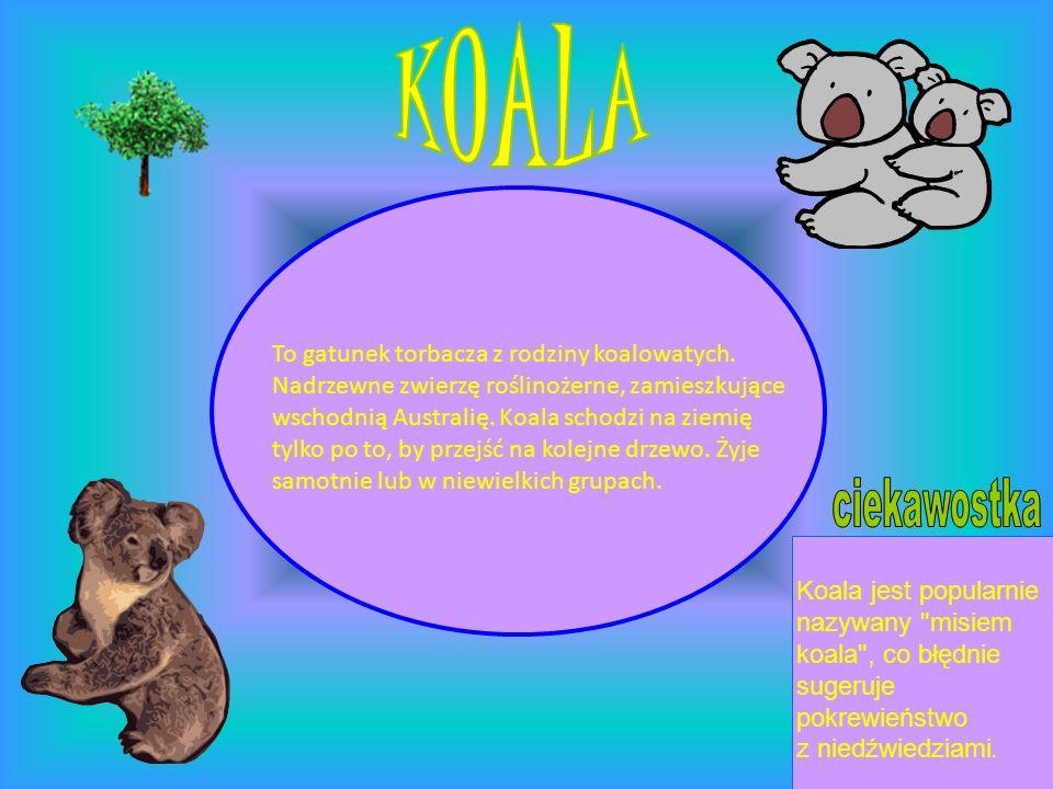 To gatunek torbacza z rodziny koalowatych. Nadrzewne zwierzę roślinożerne, zamieszkujące wschodnią Australię. Koala schodzi na ziemię tylko po to, by