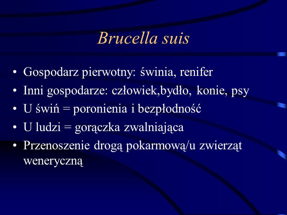 Brucella suis Gospodarz pierwotny: świnia, renifer Inni gospodarze: człowiek,bydło, konie, psy U świń = poronienia i bezpłodność U ludzi = gorączka zw