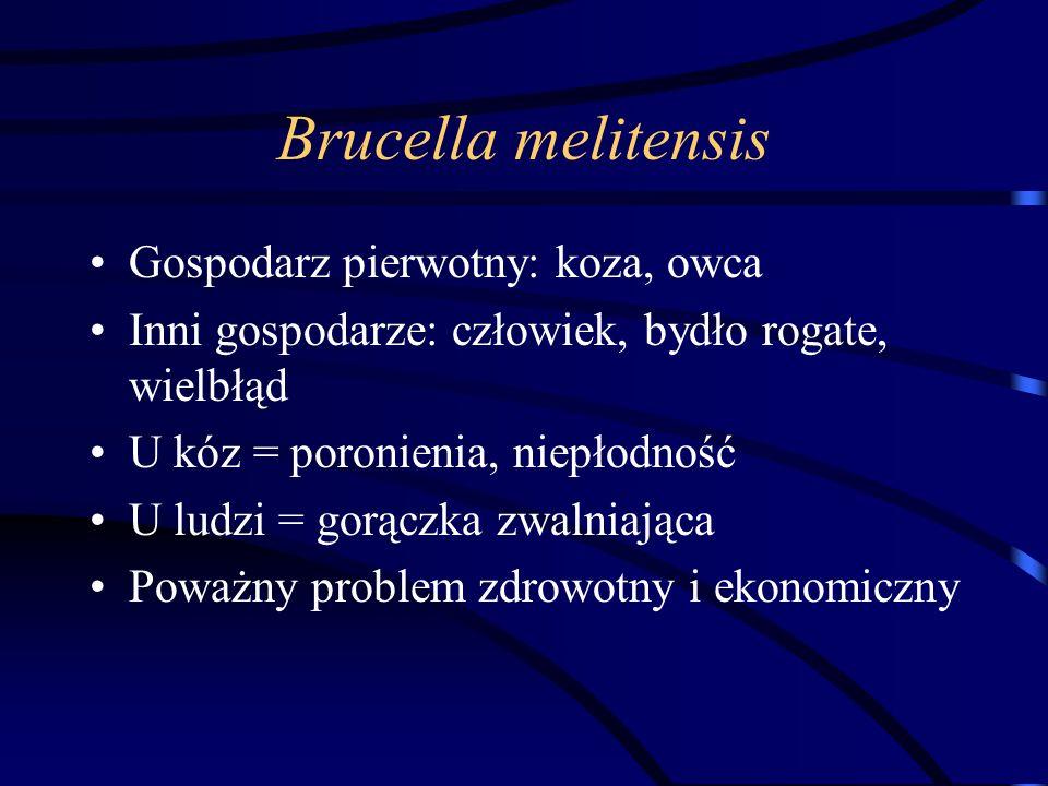 Brucella melitensis Gospodarz pierwotny: koza, owca Inni gospodarze: człowiek, bydło rogate, wielbłąd U kóz = poronienia, niepłodność U ludzi = gorącz
