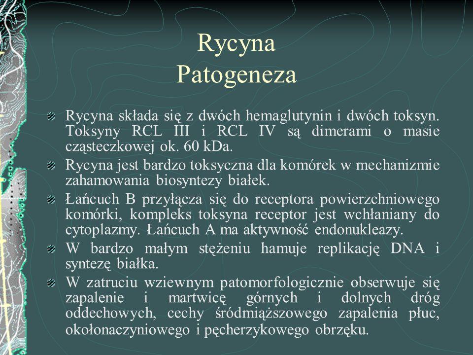 Rycyna Patogeneza Rycyna składa się z dwóch hemaglutynin i dwóch toksyn. Toksyny RCL III i RCL IV są dimerami o masie cząsteczkowej ok. 60 kDa. Rycyna
