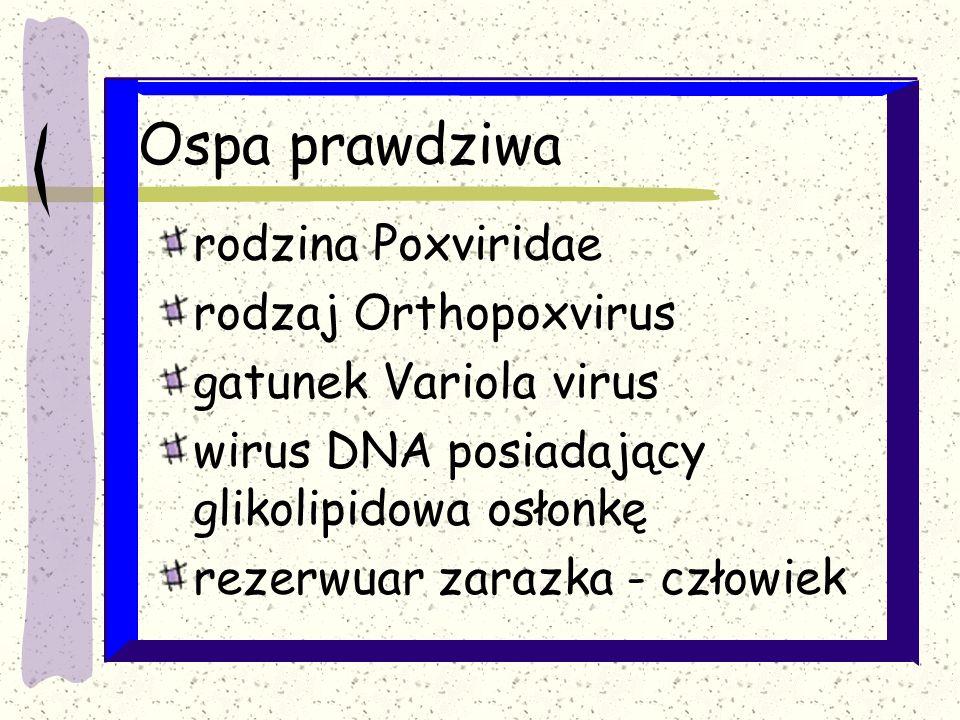 Ospa prawdziwa szczepienia Dostępna jest szczepionka zawierająca żywego, atenuowanego wirusa krowianki Okres ochronny do 10 lat od szczepienia; 3-5 lat b.dobry, po 20 latach – nieistotny; aczkolwiek czasem odporność szczątkowa po 30 latach (w razie zakażenia może chronić przed śmiercią, rozwija się postać poronna ospy); Przeciwwskazania do szczepień: ciąża (poronienia), immunosupresja, zakażenie HIV (replikacja), wyprysk alergiczny, uczulenie na składniki Szczepionka jest skuteczna po ekspozycji na wirusa ospy prawdziwej (zalecenie – szczepić do 4 dni po ekspozycji) W przypadku ekspozycji od której upłynęło >3 doby podać szczepionkę i immunoglobulinę (0,6 ml/kg wagi ciała) zapasy WHO 500 000 dawek