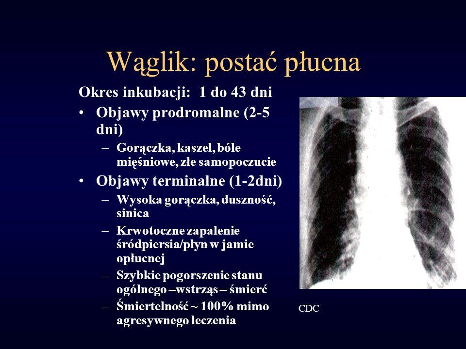 Wąglik: postać płucna Okres inkubacji: 1 do 43 dni Objawy prodromalne (2-5 dni) –Gorączka, kaszel, bóle mięśniowe, złe samopoczucie Objawy terminalne