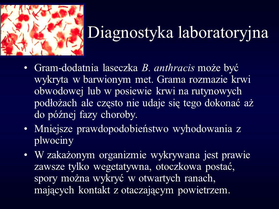 Diagnostyka laboratoryjna Gram-dodatnia laseczka B. anthracis może być wykryta w barwionym met. Grama rozmazie krwi obwodowej lub w posiewie krwi na r
