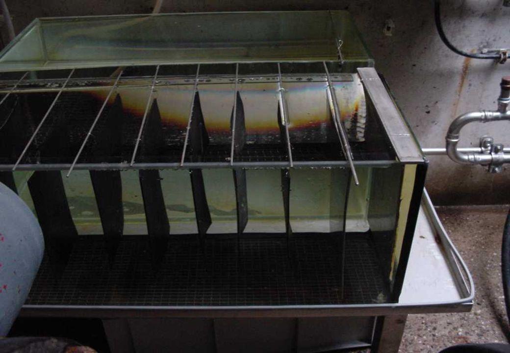C 2009 Tuschewitzki Hygiene-Institut des Ruhrgebiets Institut für Umwelthygiene und Umweltmedizin www.hyg.de 21