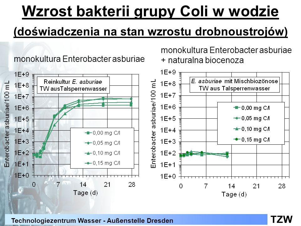 TZW Technologiezentrum Wasser - Außenstelle Dresden Wzrost bakterii grupy Coli w wodzie (doświadczenia na stan wzrostu drobnoustrojów) monokultura Ent