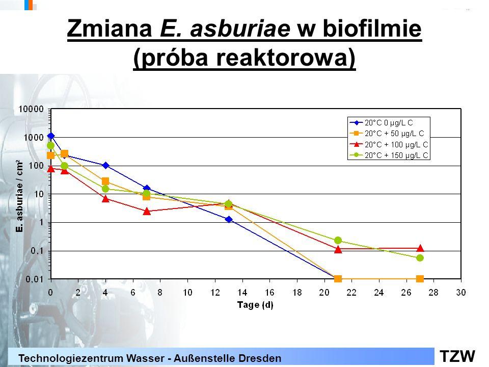 TZW Technologiezentrum Wasser - Außenstelle Dresden Zmiana E. asburiae w biofilmie (próba reaktorowa)