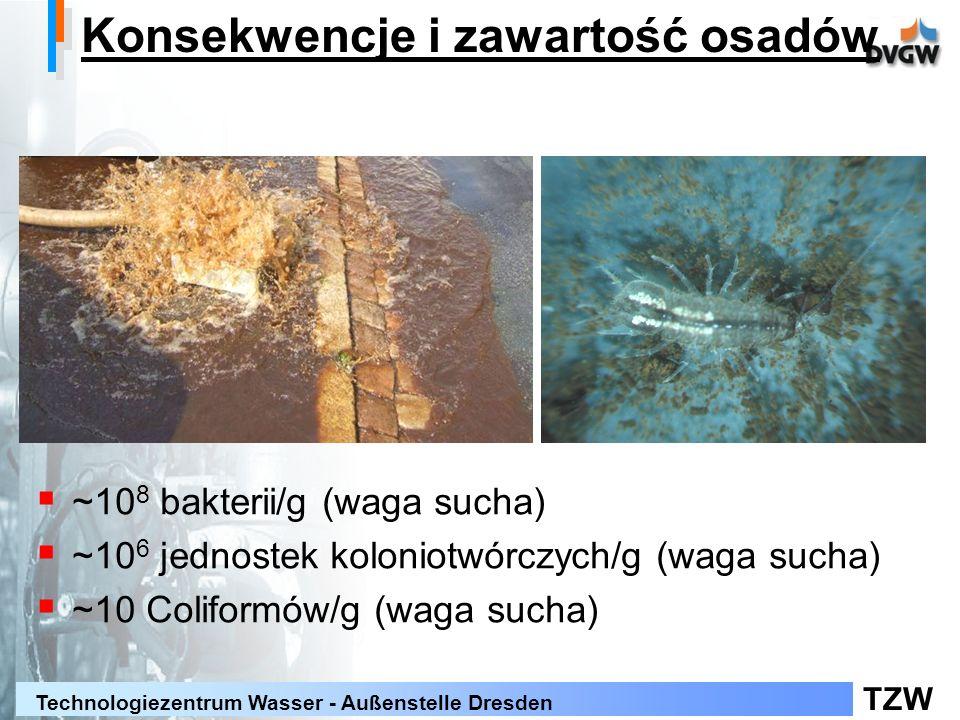 TZW Technologiezentrum Wasser - Außenstelle Dresden Konsekwencje i zawartość osadów ~10 8 bakterii/g (waga sucha) ~10 6 jednostek koloniotwórczych/g (waga sucha) ~10 Coliformów/g (waga sucha)