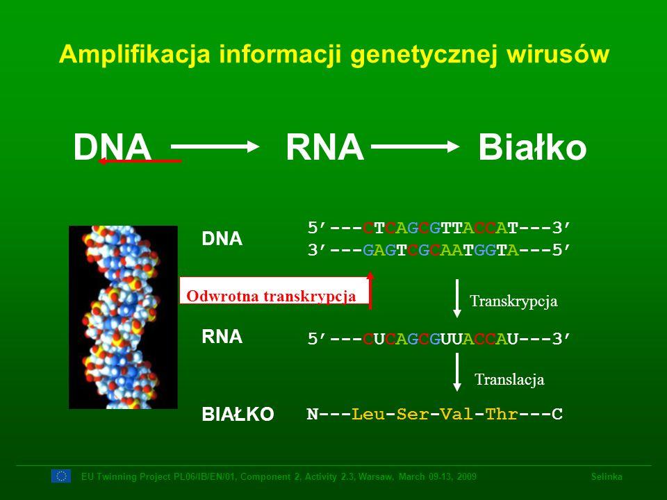 5---CTCAGCGTTACCAT---3 3---GAGTCGCAATGGTA---5 5---CUCAGCGUUACCAU---3 N---Leu-Ser-Val-Thr---C DNA RNA BIAŁKO Transkrypcja Translacja DNA RNA Białko Amp