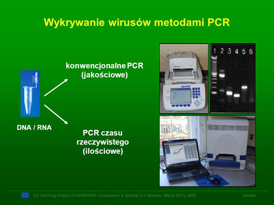 Wykrywanie wirusów metodami PCR konwencjonalne PCR (jakościowe) PCR czasu rzeczywistego (ilościowe) DNA / RNA EU Twinning Project PL06/IB/EN/01, Compo