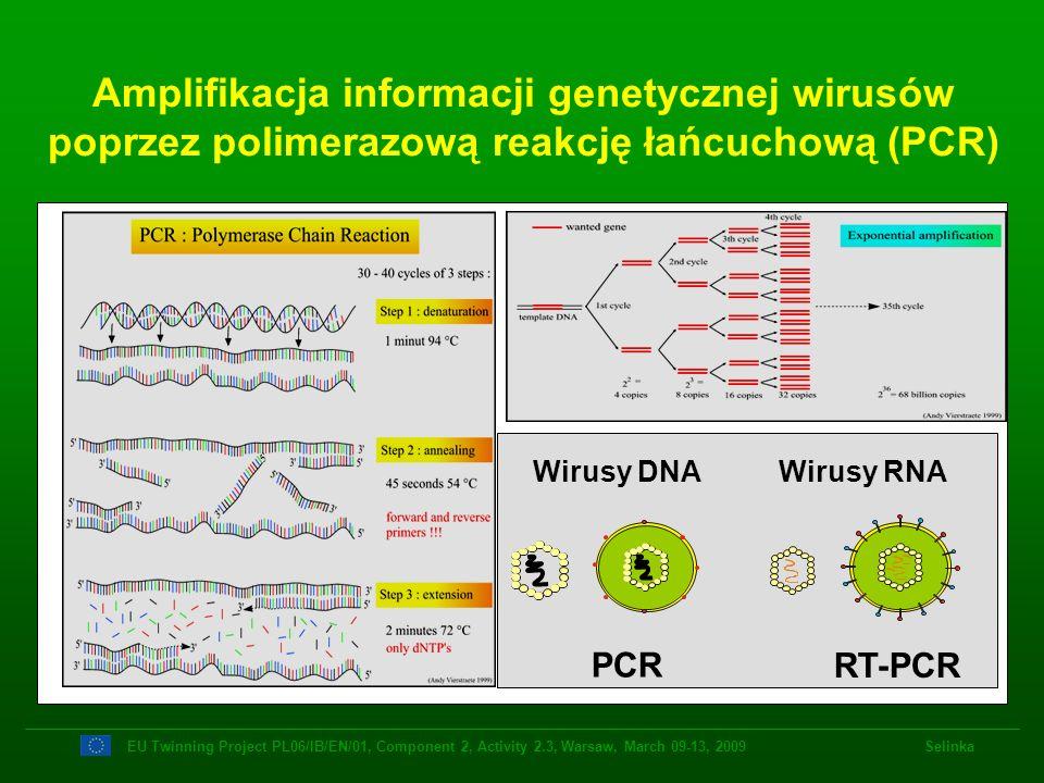 Amplifikacja informacji genetycznej wirusów poprzez polimerazową reakcję łańcuchową (PCR) EU Twinning Project PL06/IB/EN/01, Component 2, Activity 2.3