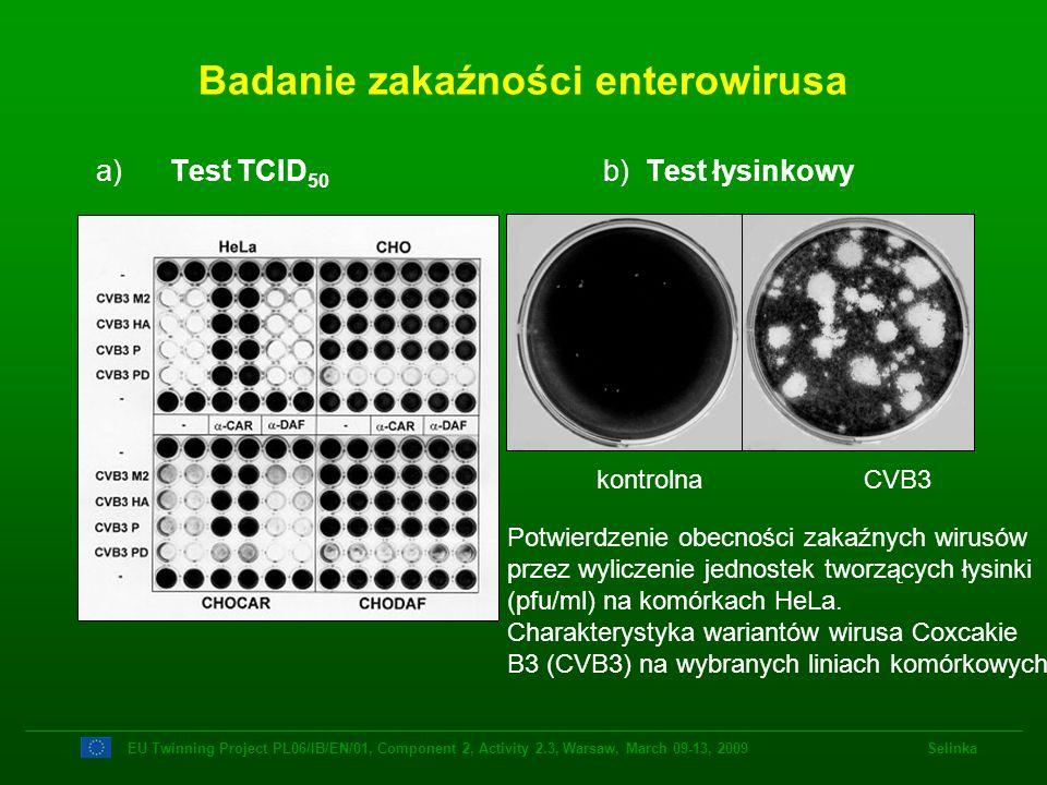 a) Test TCID 50 b) Test łysinkowy Badanie zakaźności enterowirusa kontrolna CVB3 Potwierdzenie obecności zakaźnych wirusów przez wyliczenie jednostek