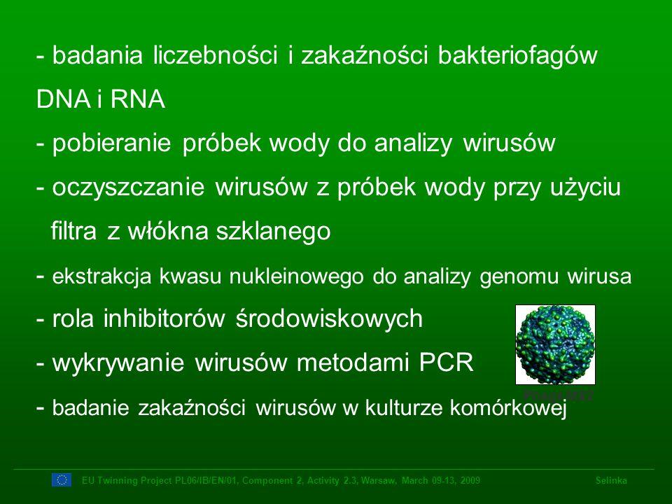Wykrywanie i oznaczanie liczebności bakteriofagów Fagi somatyczne DIN EN ISO 10705-2:2001 Fagi F+RNA DIN EN ISO 10705-1:2001 EU Twinning Project PL06/IB/EN/01, Component 2, Activity 2.3, Warsaw, March 09-13, 2009 Selinka Fagi F+RNA F-Pilus Fagi somatyczne Bacterium Fagi B.
