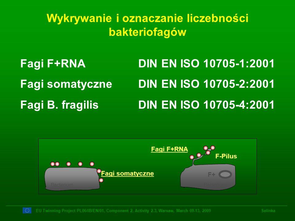 Wykrywanie i oznaczanie liczebności bakteriofagów Fagi somatyczne DIN EN ISO 10705-2:2001 Fagi F+RNA DIN EN ISO 10705-1:2001 EU Twinning Project PL06/
