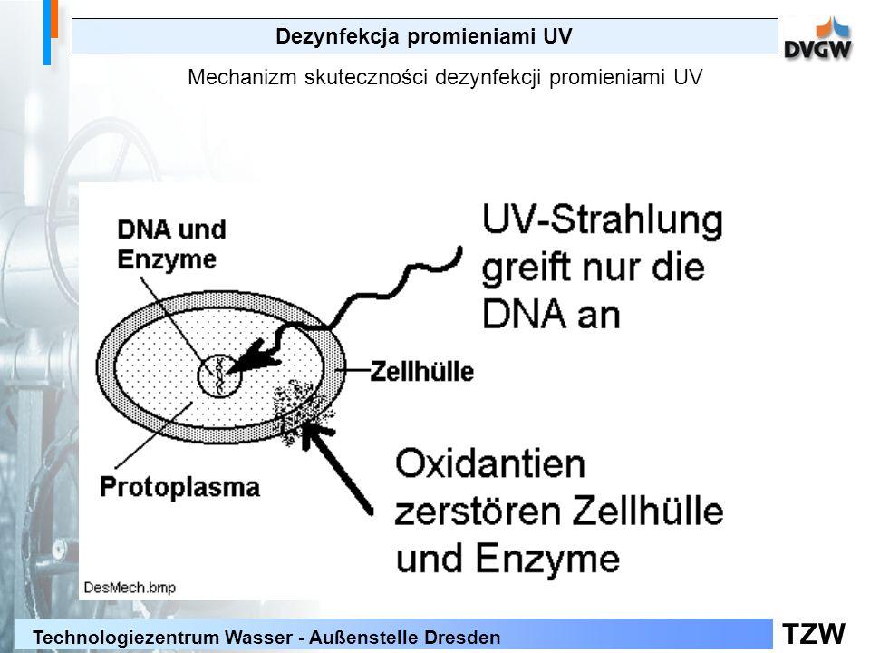 TZW Technologiezentrum Wasser - Außenstelle Dresden Dezynfekcja promieniami UV Mechanizm skuteczności dezynfekcji promieniami UV