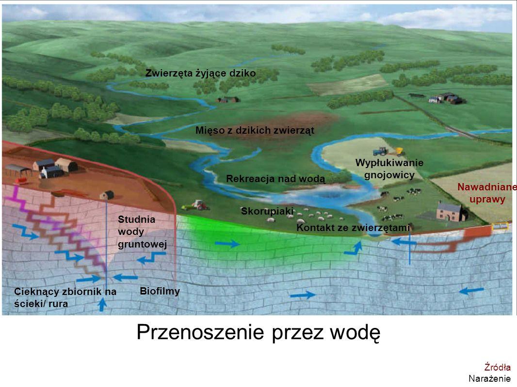 ana.maria.de.roda.husman@rivm.nl I TW mar 2009 Wypłukiwanie gnojowicy Przenoszenie przez wodę Cieknący zbiornik na ścieki/ rura Rekreacja nad wodą Stu