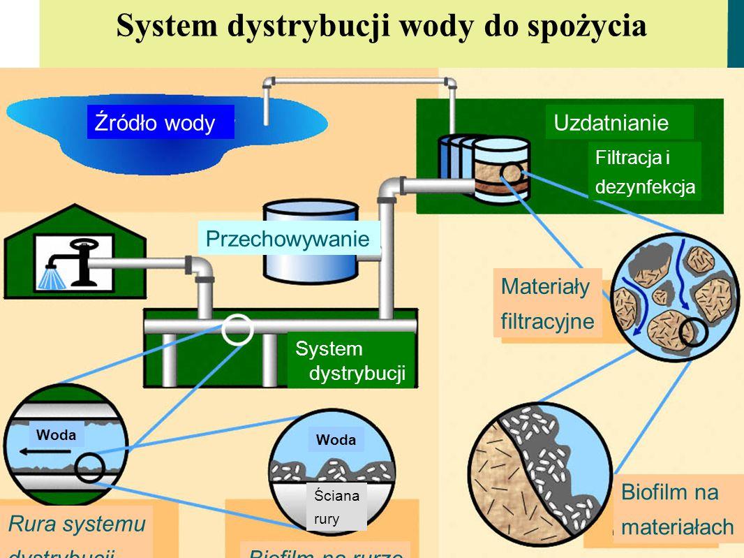 ana.maria.de.roda.husman@rivm.nl I TW mar 2009 System dystrybucji wody do spożycia Rura systemu dystrybucji Biofilm na rurze Przechowywanie Źródło wod