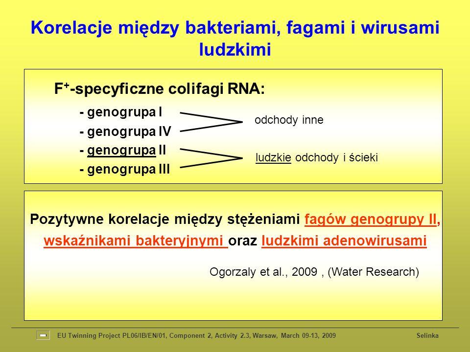 F + -specyficzne colifagi RNA: - genogrupa I - genogrupa IV - genogrupa II - genogrupa III odchody inne ludzkie odchody i ścieki Pozytywne korelacje między stężeniami fagów genogrupy II, wskaźnikami bakteryjnymi oraz ludzkimi adenowirusami Ogorzaly et al., 2009, (Water Research) Korelacje między bakteriami, fagami i wirusami ludzkimi EU Twinning Project PL06/IB/EN/01, Component 2, Activity 2.3, Warsaw, March 09-13, 2009 Selinka