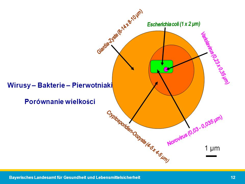 Bayerisches Landesamt für Gesundheit und Lebensmittelsicherheit 12 Wirusy – Bakterie – Pierwotniaki Porównanie wielko ś ci 1 µm