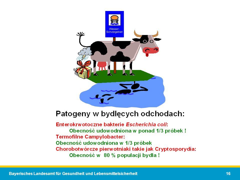 Bayerisches Landesamt für Gesundheit und Lebensmittelsicherheit 16