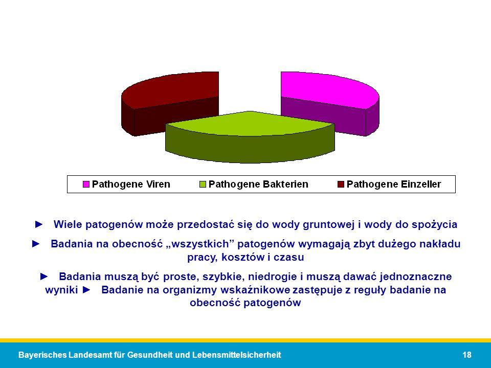 Bayerisches Landesamt für Gesundheit und Lebensmittelsicherheit 18 Wiele patogenów może przedostać się do wody gruntowej i wody do spożycia Badania na obecność wszystkich patogenów wymagają zbyt dużego nakładu pracy, kosztów i czasu Badania muszą być proste, szybkie, niedrogie i muszą dawać jednoznaczne wyniki Badanie na organizmy wskaźnikowe zastępuje z reguły badanie na obecność patogenów