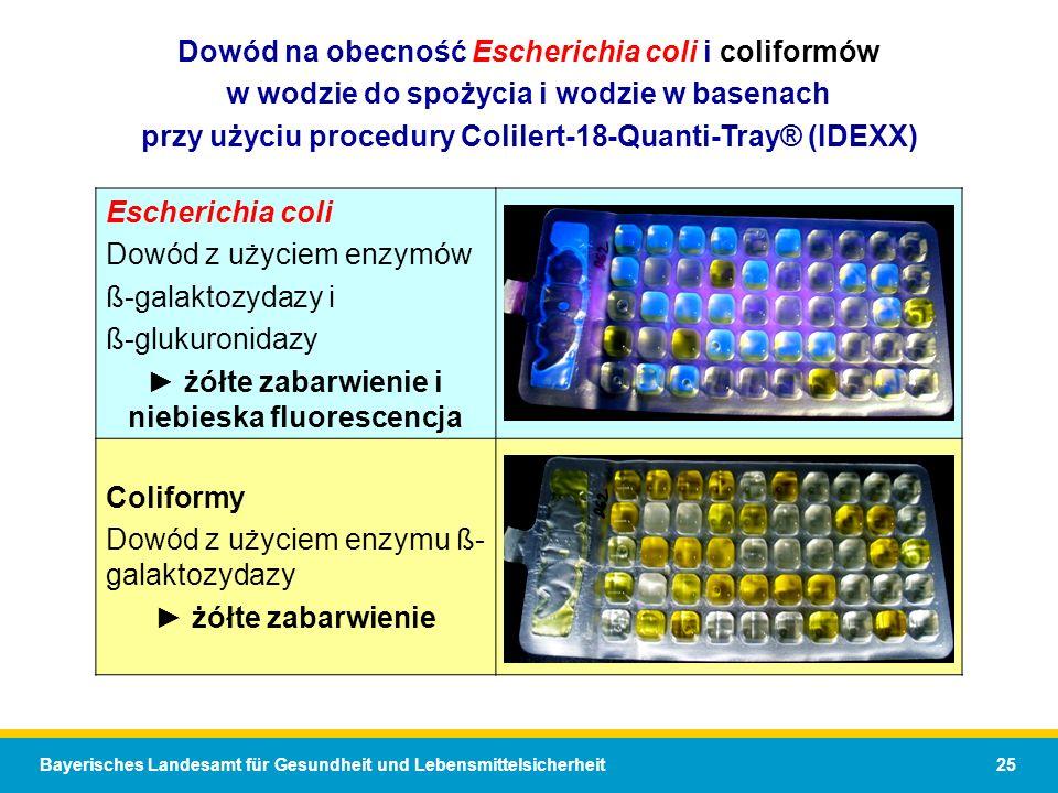 Bayerisches Landesamt für Gesundheit und Lebensmittelsicherheit 25 Dowód na obecność Escherichia coli i coliformów w wodzie do spożycia i wodzie w basenach przy użyciu procedury Colilert-18-Quanti-Tray® (IDEXX) Escherichia coli Dowód z użyciem enzymów ß-galaktozydazy i ß-glukuronidazy żółte zabarwienie i niebieska fluorescencja Coliformy Dowód z użyciem enzymu ß- galaktozydazy żółte zabarwienie