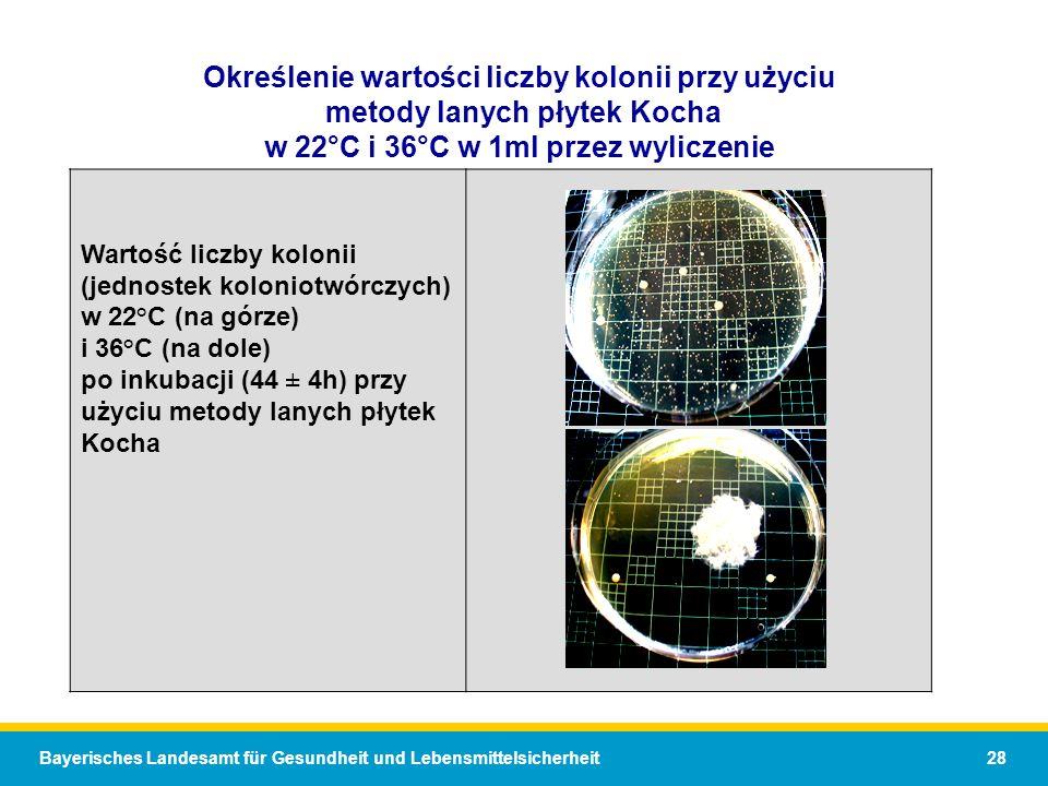 Bayerisches Landesamt für Gesundheit und Lebensmittelsicherheit 28 Określenie wartości liczby kolonii przy użyciu metody lanych płytek Kocha w 22°C i 36°C w 1ml przez wyliczenie Wartość liczby kolonii (jednostek koloniotwórczych) w 22°C (na górze) i 36°C (na dole) po inkubacji (44 ± 4h) przy użyciu metody lanych płytek Kocha