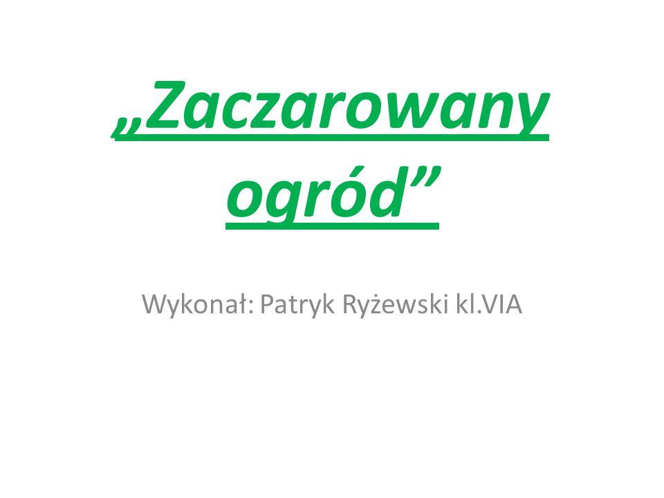 Zaczarowany ogród Wykonał: Patryk Ryżewski kl.VIA