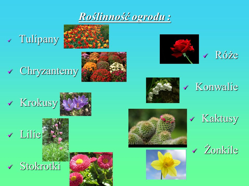 Roślinność ogrodu : Tulipany Tulipany Róże Róże Chryzantemy Chryzantemy Konwalie Konwalie Krokusy Krokusy Kaktusy Kaktusy Lilie Lilie Żonkile Żonkile