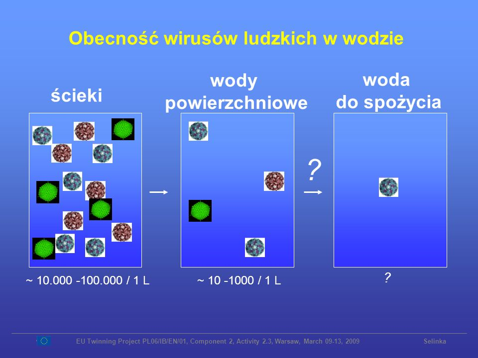 Obecność wirusów ludzkich w wodzie ścieki wody powierzchniowe woda do spożycia ~ 10 -1000 / 1 L~ 10.000 -100.000 / 1 L ? ? EU Twinning Project PL06/IB