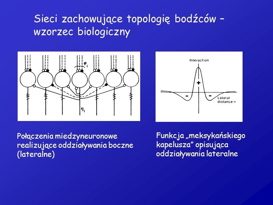 Sieci zachowujące topologię bodźców – wzorzec biologiczny Połączenia miedzyneuronowe realizujące oddziaływania boczne (lateralne) Funkcja meksykańskie