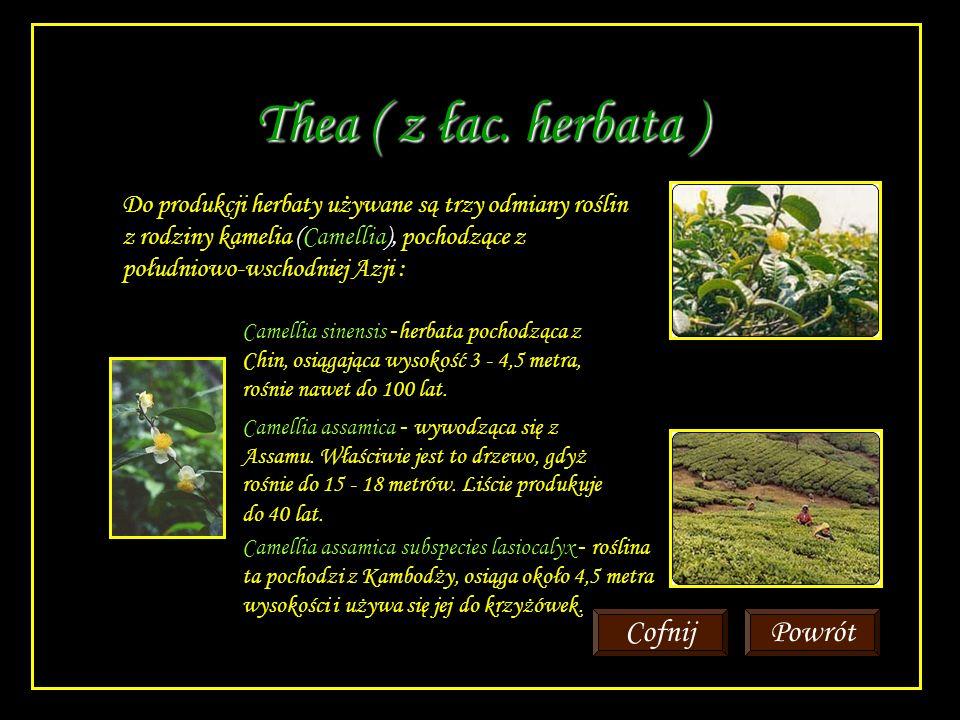 Herbata zielona Herbata zielona pochodzi z tej samej rośliny co herbata czarna.