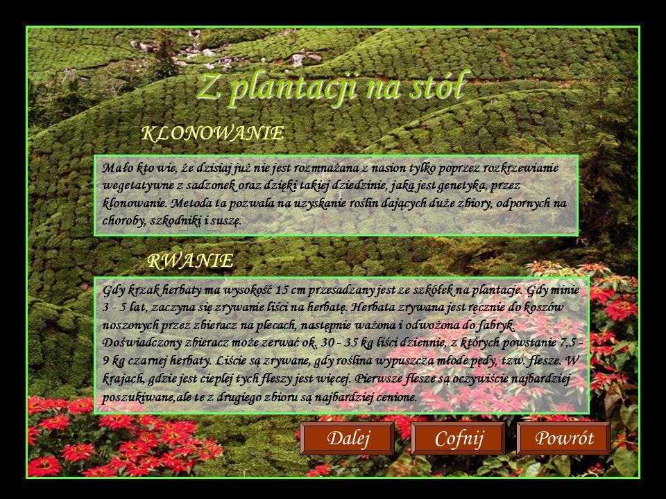 Z plantacji na stół Mało kto wie, że dzisiaj już nie jest rozmnażana z nasion tylko poprzez rozkrzewianie wegetatywne z sadzonek oraz dzięki takiej dziedzinie, jaką jest genetyka, przez klonowanie.