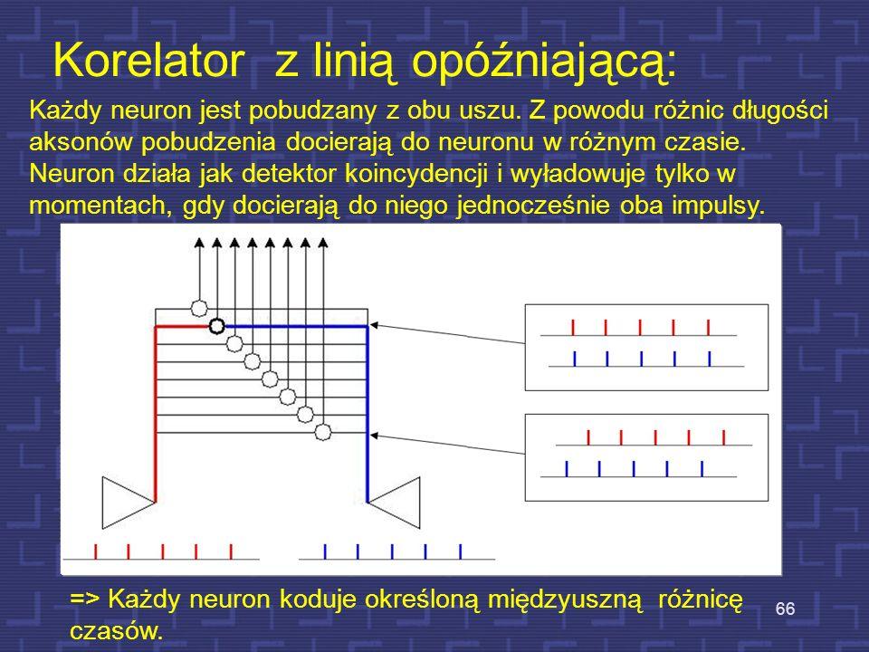 Każdy neuron jest pobudzany z obu uszu. Z powodu różnic długości aksonów pobudzenia docierają do neuronu w różnym czasie. Neuron działa jak detektor k