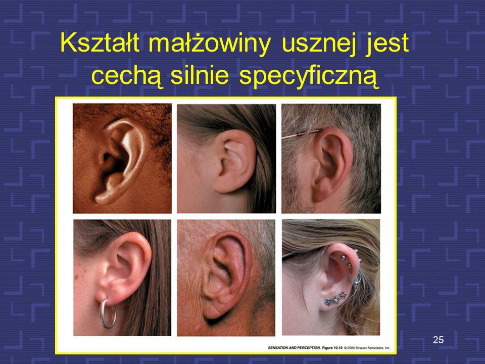 Kształt małżowiny usznej jest cechą silnie specyficzną 25