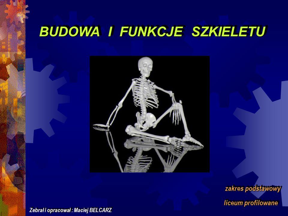BUDOWA I FUNKCJE SZKIELETU zakres podstawowy liceum profilowane opracował Zebrał i opracował : Maciej BELCARZ