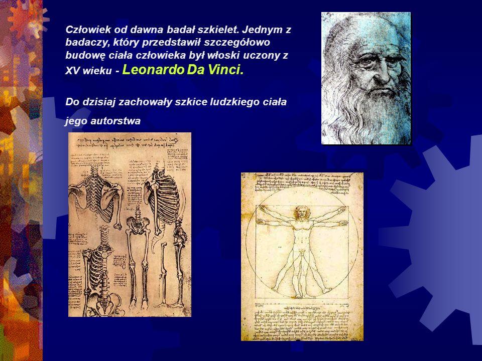 Człowiek od dawna badał szkielet. Jednym z badaczy, który przedstawił szczegółowo budowę ciała człowieka był włoski uczony z XV wieku - Leonardo Da Vi