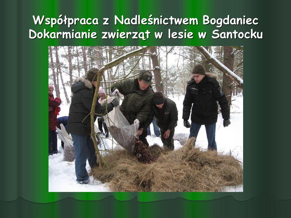 Współpraca z Nadleśnictwem Bogdaniec Dokarmianie zwierząt w lesie w Santocku