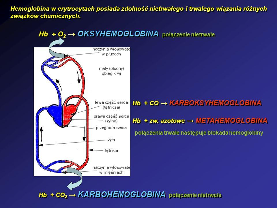 Hb + O 2 OKSYHEMOGLOBINA połączenie nietrwałe Hb + CO 2 KARBOHEMOGLOBINA połączenie nietrwałe Hb + CO KARBOKSYHEMOGLOBINA Hb + zw. azotowe METAHEMOGLO