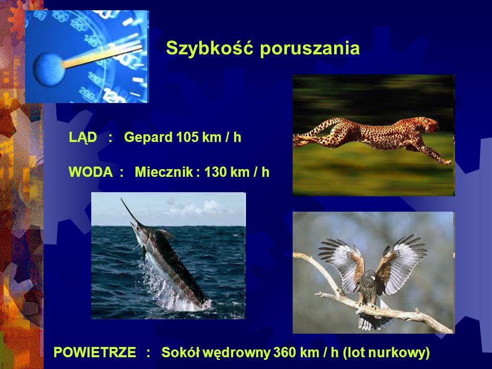 Szybkość poruszania LĄD : Gepard 105 km / h POWIETRZE : Sokół wędrowny 360 km / h (lot nurkowy) WODA : Miecznik : 130 km / h