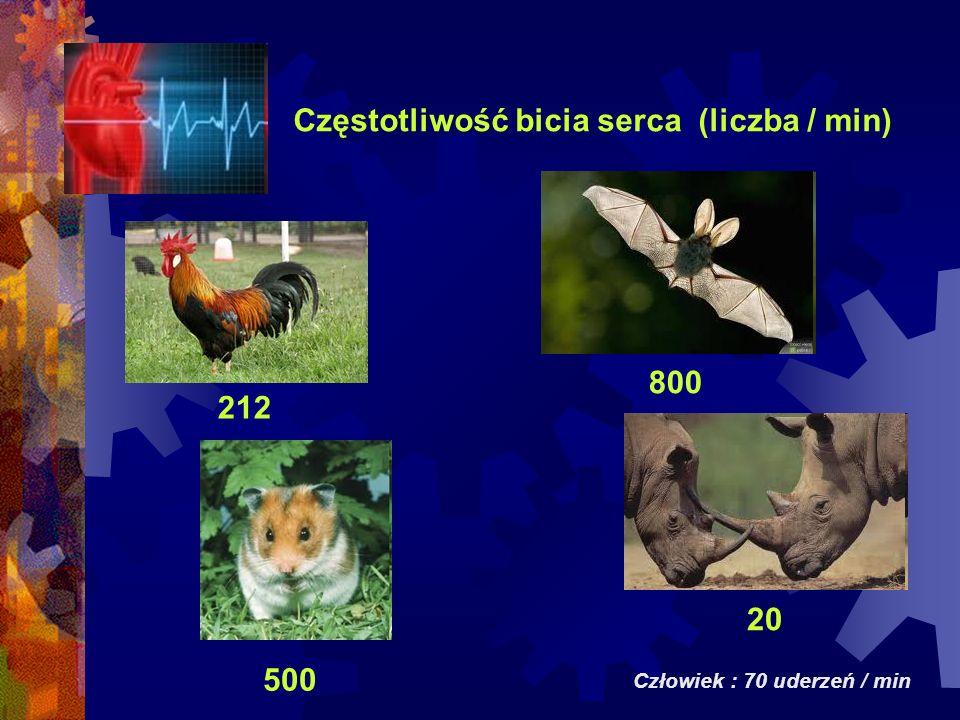Częstotliwość bicia serca (liczba / min) Człowiek : 70 uderzeń / min 212 500 20 800