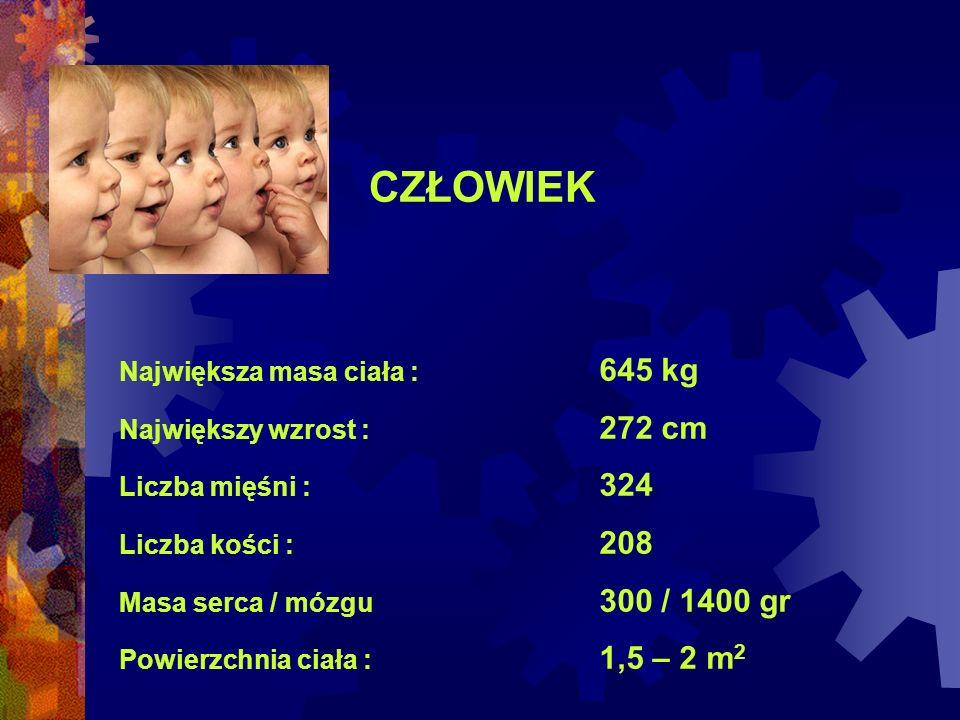 CZŁOWIEK Największa masa ciała : 645 kg Największy wzrost : 272 cm Liczba mięśni : 324 Liczba kości : 208 Masa serca / mózgu 300 / 1400 gr Powierzchni