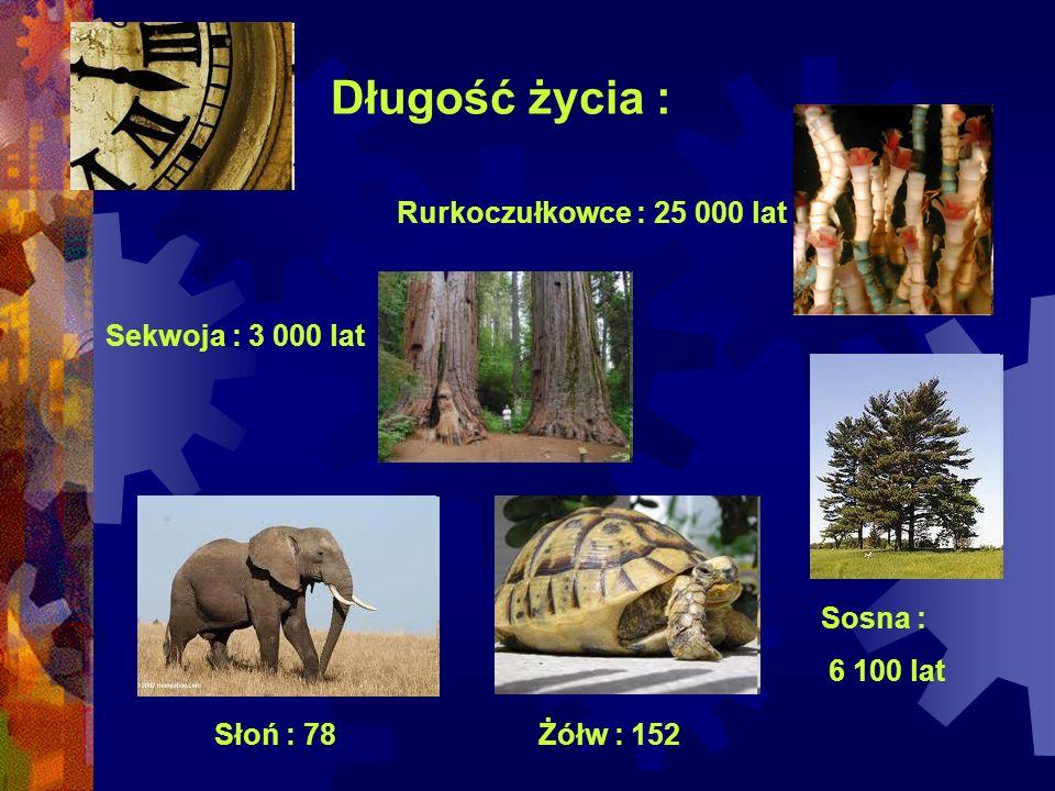 Długość życia : Rurkoczułkowce : 25 000 lat Sekwoja : 3 000 lat Sosna : 6 100 lat Żółw : 152Słoń : 78