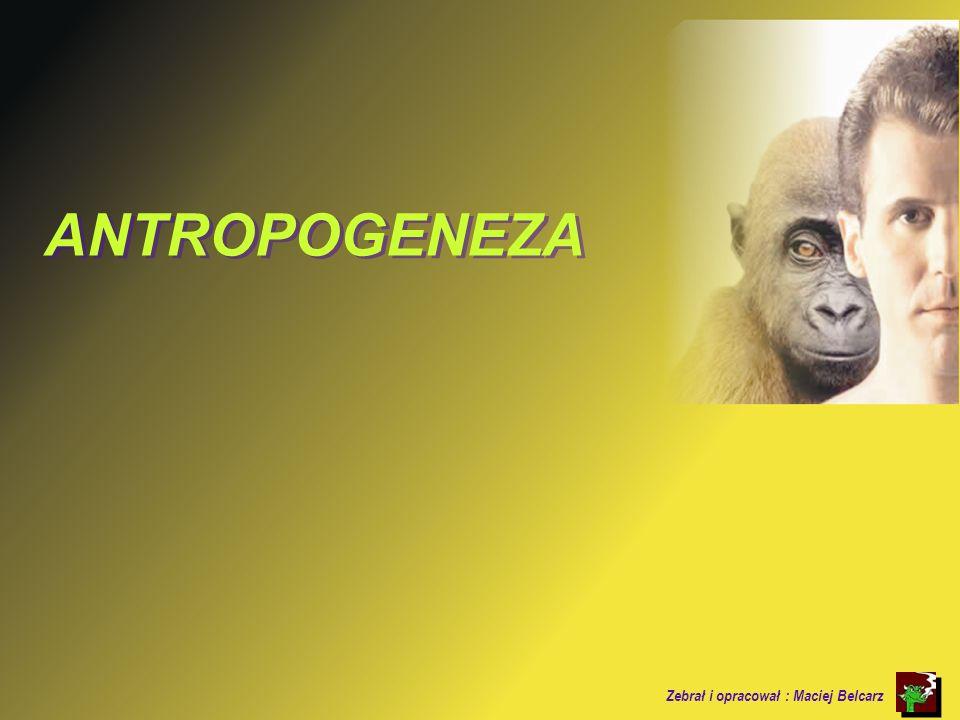 100 tys pne.HOMO SAPIENS SAPIENS (człowiek ROZUMNY) Wyewoluował w Afryce.