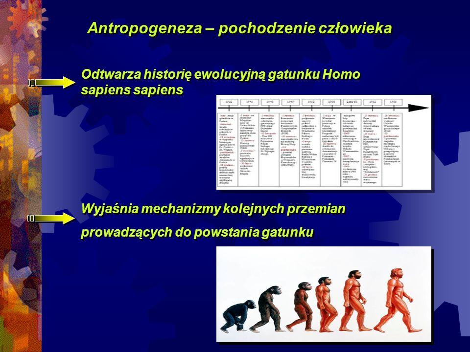 Antropogeneza – pochodzenie człowieka Odtwarza historię ewolucyjną gatunku Homo sapiens sapiens Wyjaśnia mechanizmy kolejnych przemian prowadzących do powstania gatunku Wyjaśnia mechanizmy kolejnych przemian prowadzących do powstania gatunku